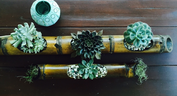 Emma and Grant_Real wedding_diy_succulents_tablescape